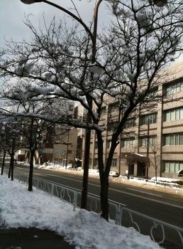 長野_雪の街路樹