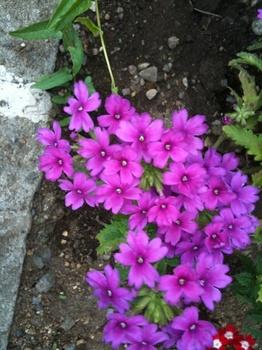 道ばた花壇